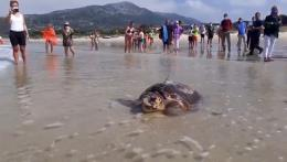 Sparrow, tortuga boba liberada en Cádiz, cruza el Mediterráneo tras surcar aguas de Almería, Murcia, Baleares y Cerdeña